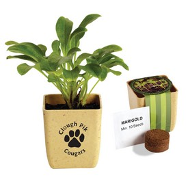Promotional Flower Pot Set With Marigold Seeds