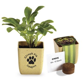 Promotional Flower Pot Set With Chive Seeds